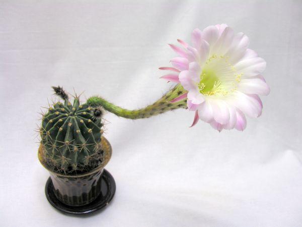 модели термобелья можно ли денжать кактусы в комнате молодой девушки выбор нижнего